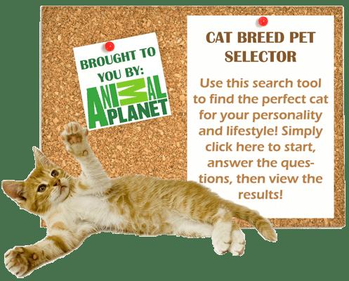 cat-breed-pet-selector